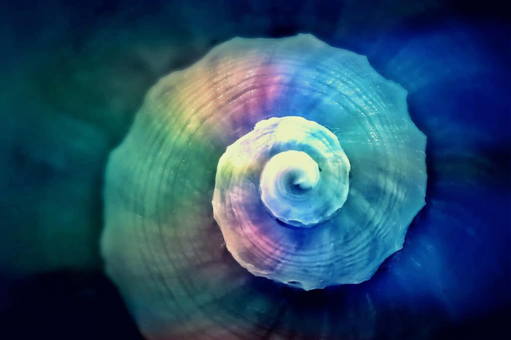 Colored Snail Akashic Energy Clearing Session