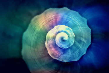 colored-snail-1