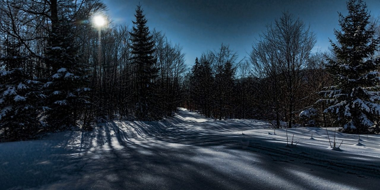 Winter snowy forest clearing in moonlight